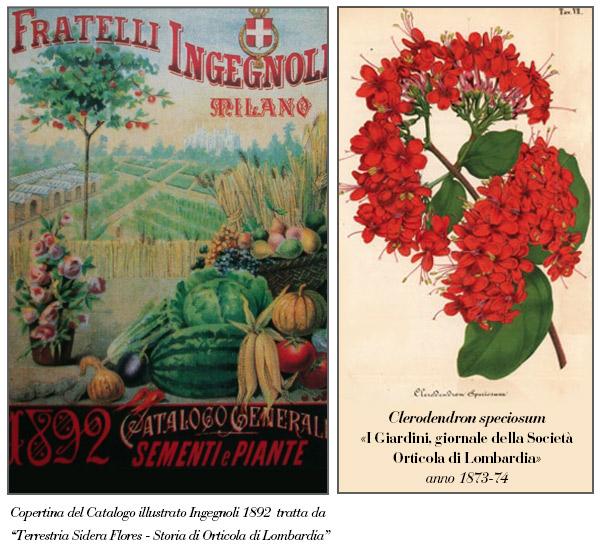 Illustrazioni Clerodendron 1873-74 e Ingegnoli 1892