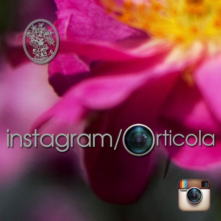 Orticola Instagram