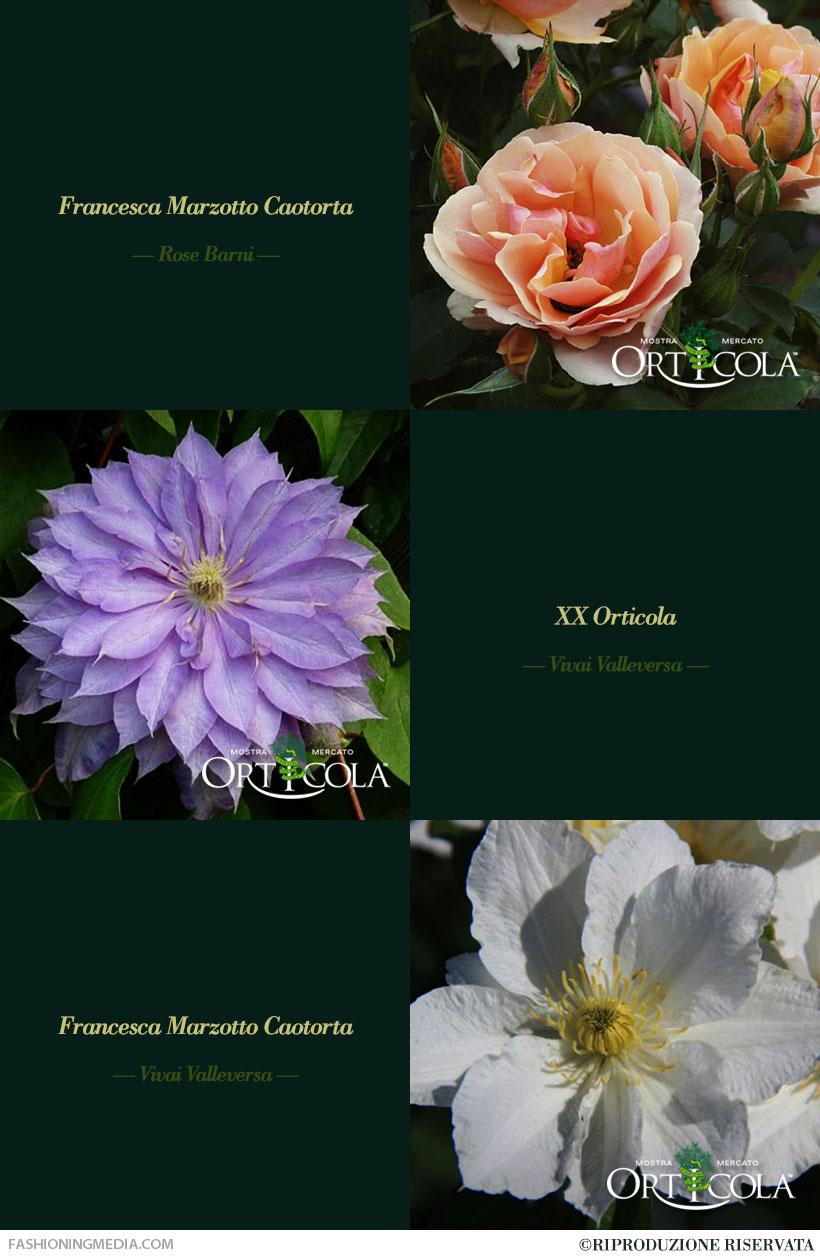 I 3 Fiori Speciali XX Orticola
