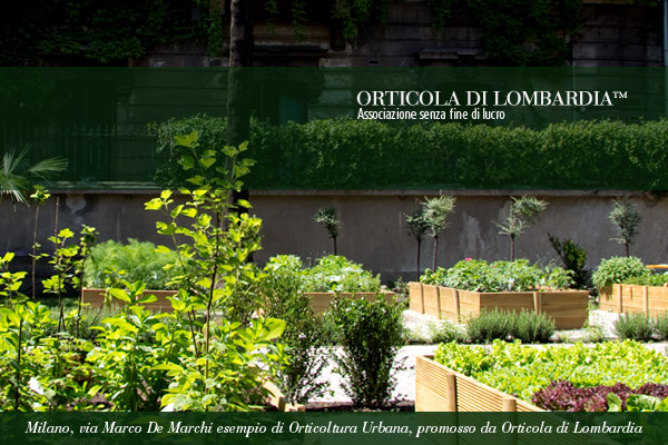 Orto Urbano in un cortile