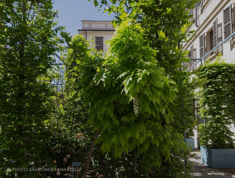 Il giardino futurista in luglio
