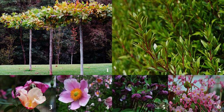 sei-piante-di-riferimento