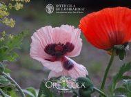 Partner di Orticola